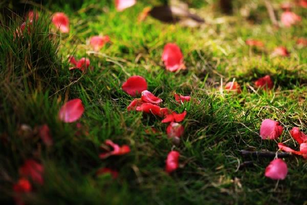 淡看云卷云舒,靜看花開花落